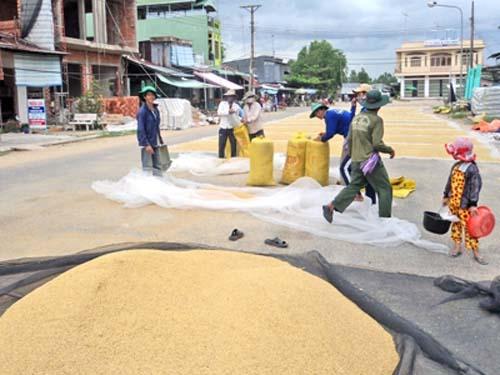 lưới phơi nông sản (lúa)