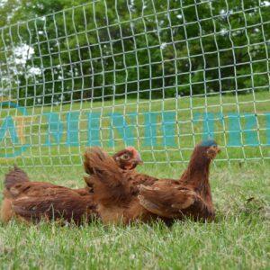 ứng dụng lưới rào gà
