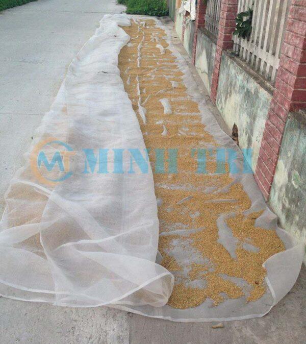 lưới chắn côn trùng phơi lúa