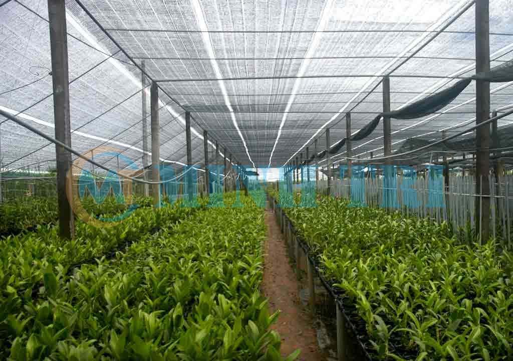 lưới che nắng trồng rau
