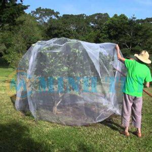 lưới chắn côn trùng cây cam